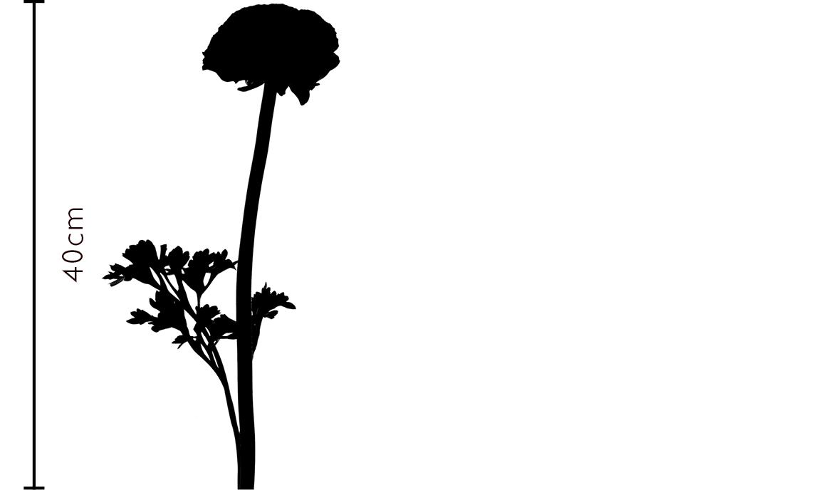 Ballet Slippers Italian Ranunculus Gift | FLOWERBX