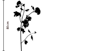 Lime Cordial Viburnum | FLOWERBX