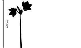 Angel Wing Eucharis Lily | FLOWERBX