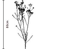 Wax Flower Silhouette